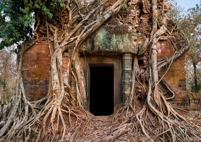Cambodia-Photo-Tour-Tree