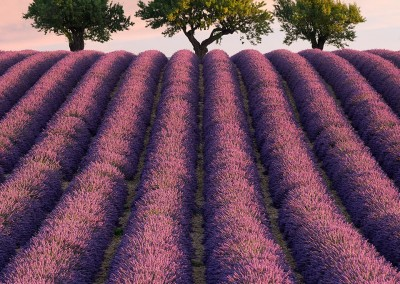 Photo-Tour-Leader-Elia-Locardi-Lavender-France