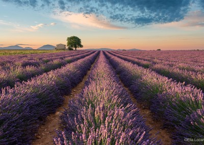 Photo-Tour-Leader-Elia-Locardi-Valensole-France