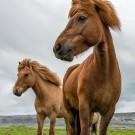 Photo-tour-Iceland-2013-Stephen-011