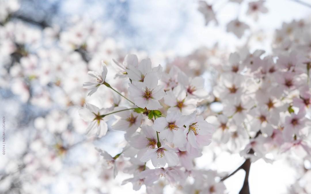 2014-04-Naomi-Locardi-Song-of-Spring-Japan