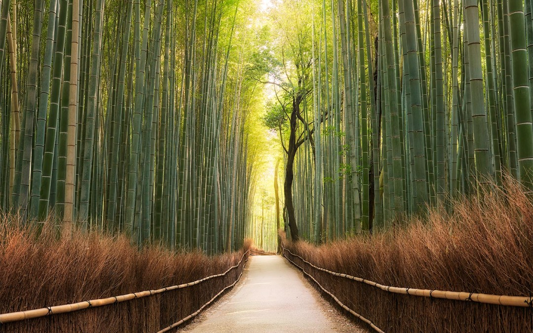 Japan-Photo-Tour-Elia-Locardi-Bamboo-Forest-glow-kyoto
