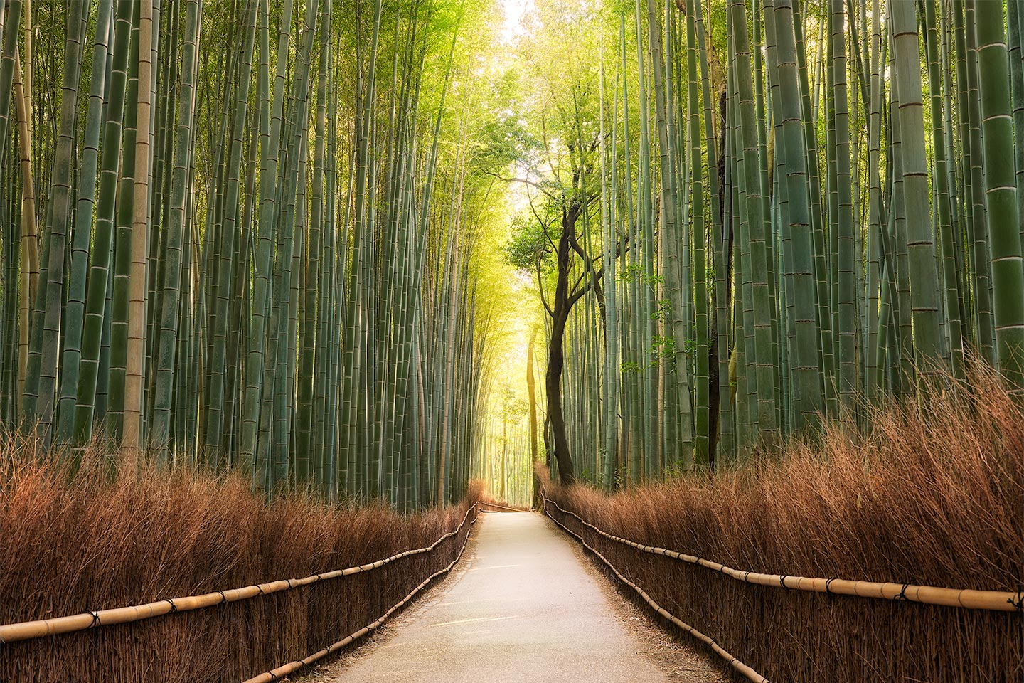 Japan-Photo-Tour-Elia-Locardi-Bamboo-Forest-glow-kyoto