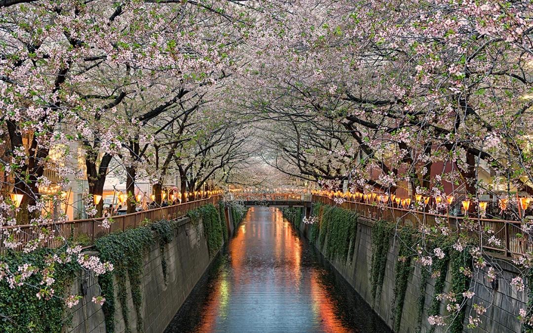Japan-Photo-Tour-Tokyo-Meguro-River-Elia