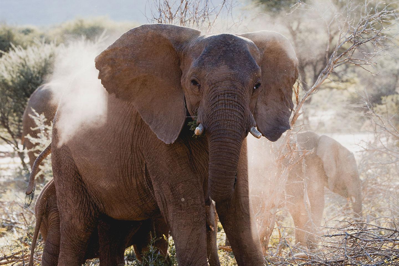 Namibia-dream-photo-tour-elephant1