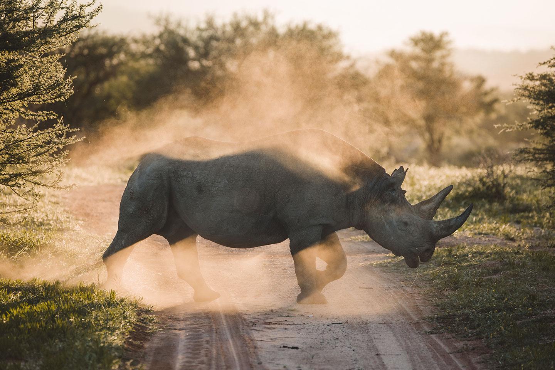 Namibia-dream-photo-tour-rhino