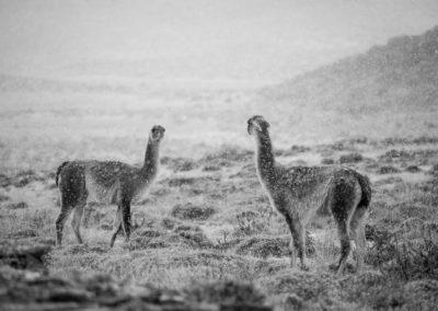 Patagonia-Eclipse-Photo-Tour-8