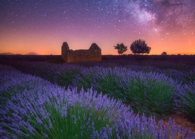 A Lavender Night