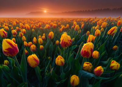 Netherlands-Photography-Drone-Workshop-tulips-2