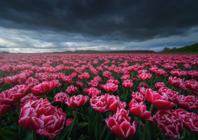 Netherlands-Photography-Drone-Workshop-tulips-4