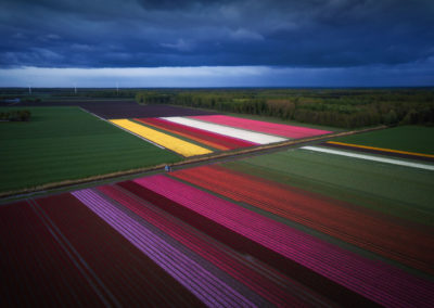 Netherlands-Photography-Drone-Workshop-tulips-7