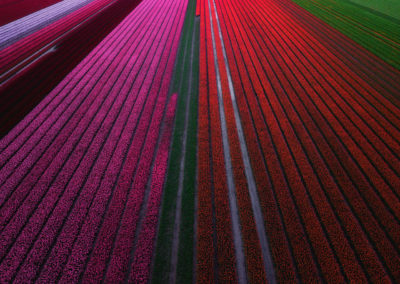 Netherlands-Photography-Drone-Workshop-tulips-8